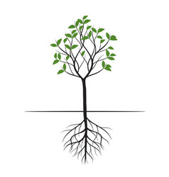 Green shape tree with leaves and roots vector