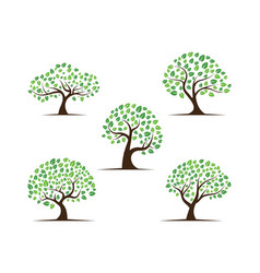 Logos green tree leaf root vector