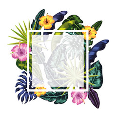 square frame with flowers plants background vector image