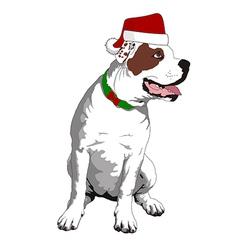 christmas bulldog vector image