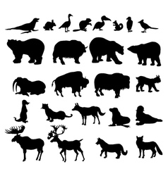 Animals Set in Canada vector image