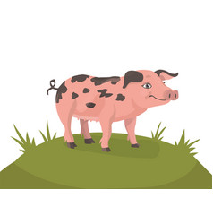 happy pig on a green meadow vector image