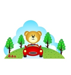 Little bear driving a car vector image