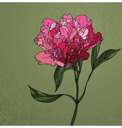 Peony stained glass window vector