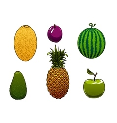 Ripe watermelon apple and other fruits vector image