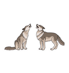 two howling grey wolves vector image