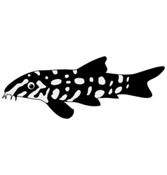 Silhouette of loach vector image vector image