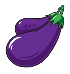 Eggplant vegetable isolated on white vector