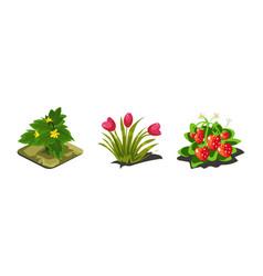 garden plants tulips strawberries game user vector image
