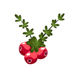 hand drawn branch cranberry berries with leaves vector image