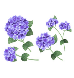 Set purple hydrangea flowers with green stems vector
