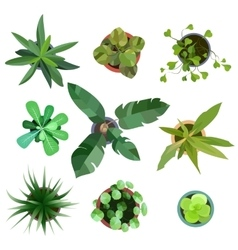 Top view plants Easy copy paste in your landscape vector image vector image
