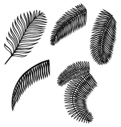 Set of palm leaves vector image vector image
