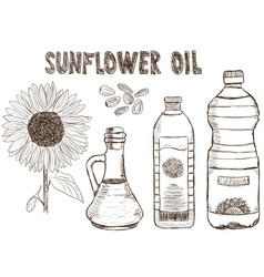 sunflower oils drawing vector image vector image