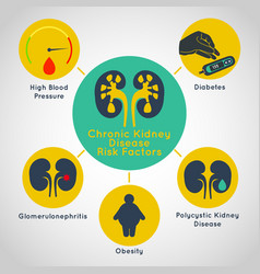 Chronic kidney disease risk factors icon vector