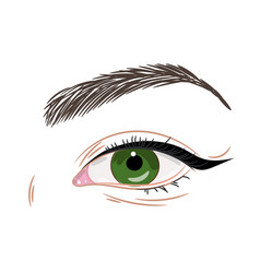 Green female eye with eyeliner vector