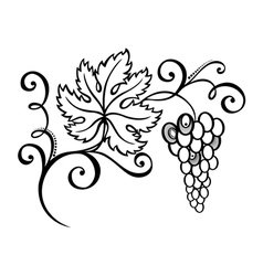 Beautiful Branch of Grapes vector