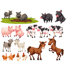 Set of animal on white background vector