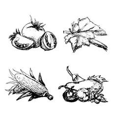 hand drawn vintage set of vegetables vector image