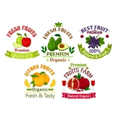 Best fresh juicy fruits stickers and labels vector