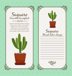 vintage label with saguaro plant vector image