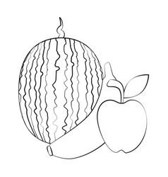 Watermelon banana and apple fruits vector