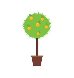 orange tree in a pot vector image vector image