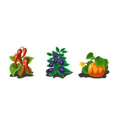 garden plants pepper eggplant and pumpkin game vector image
