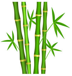 green bamboo stems with leaves on a white vector image