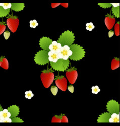 Red strawberry and flower on black background vector