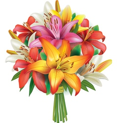 Bouquet of lilies vector