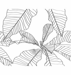 floral seamless pattern black and white magnolia vector image