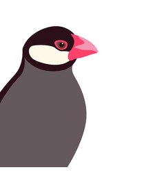 Java rice finch head flat vector