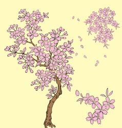 sakura blossom vector image