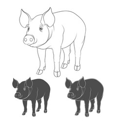 set depicting pigs vector image