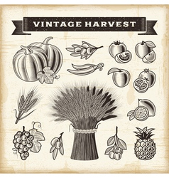 Vintage harvest set vector