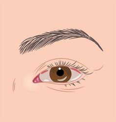 brown female eye vector image