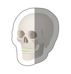 white skeleton of the human skull icon vector image