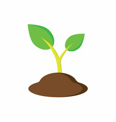 plant in the ground vector image