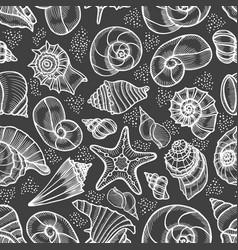 collection of seashells drawn vector image