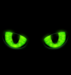 Green cats eyes isolated on a black background vector