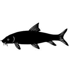Silhouette of barbel vector image
