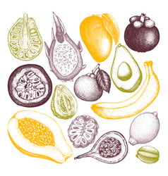 Collection of tropical fruits vector