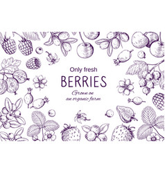 hand drawn berries frame botanical sketch vector image