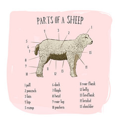 part of sheep sketch style vector image