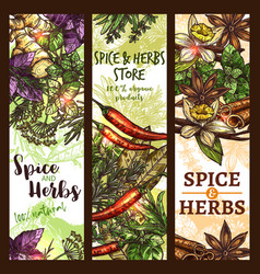 Sketch spices and herbs store banners vector
