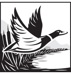 Monochrome with flying wild duck over vector
