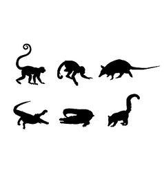 Picture of a wild animals vector image vector image