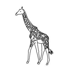 Giraffe animal herbivore african wildlife vector