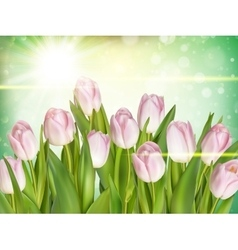 Spring background with tulips eps 10 vector